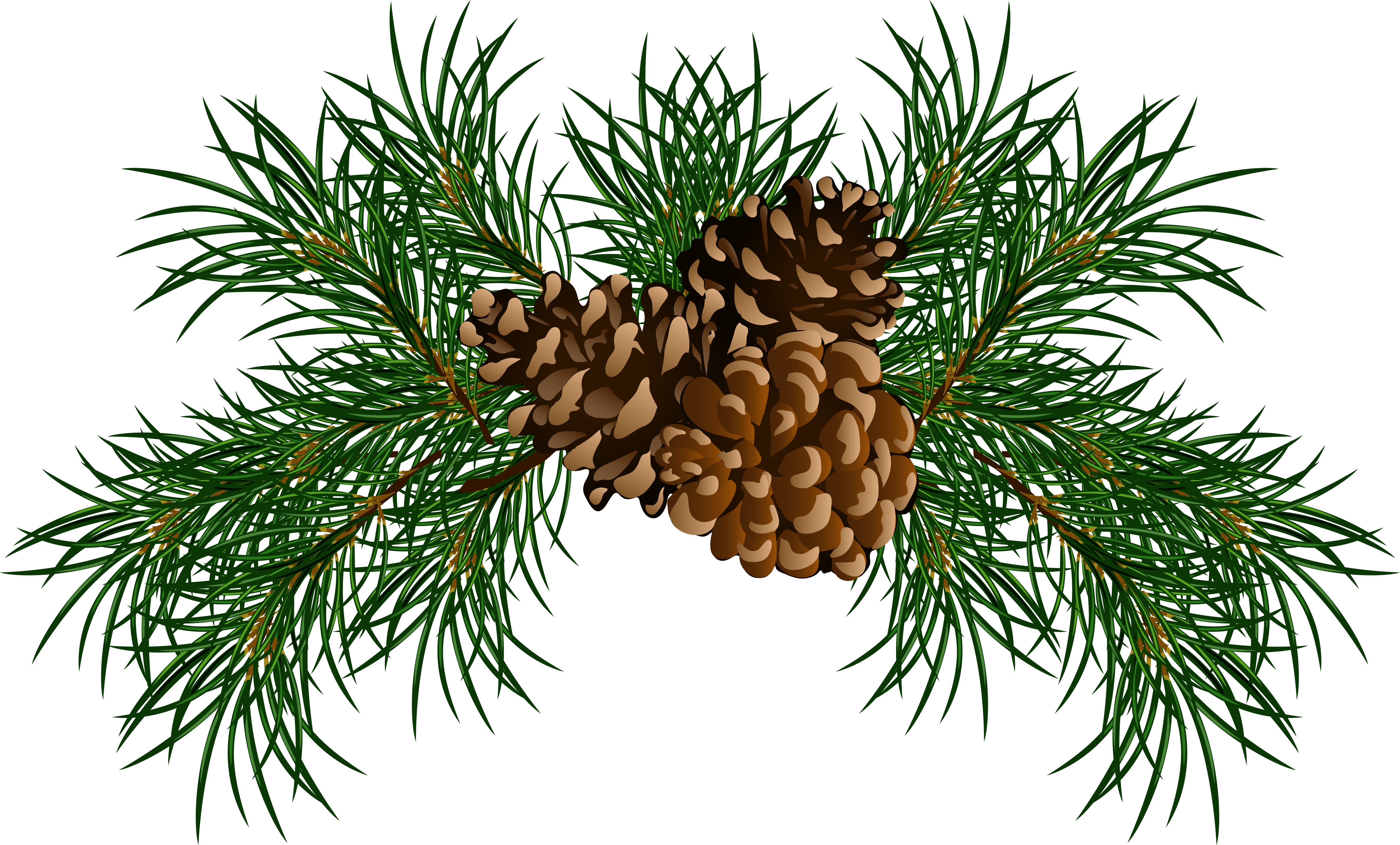 collection of christmas. Garland clipart pine cone