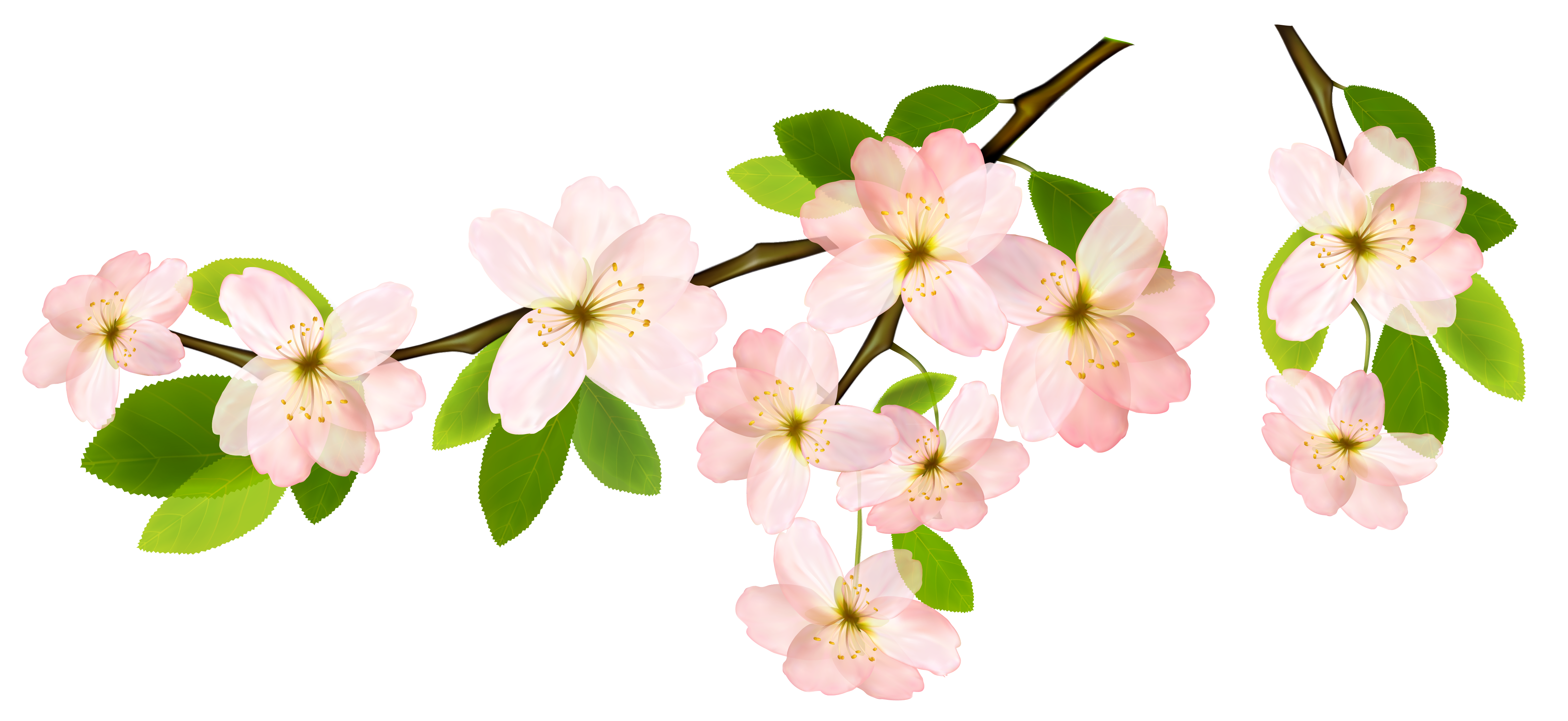 Branch png picture leaves. Garland clipart spring