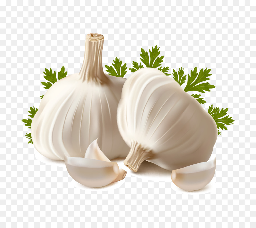Garlic clipart. Bread oil clip art