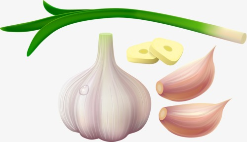 Garlic clipart. Png image and for