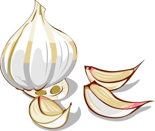 Clip art free vector. Garlic clipart