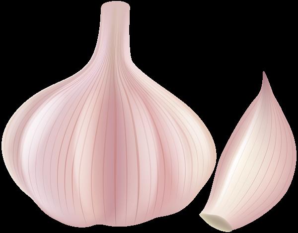 Garlic clipart. Png clip art gallery