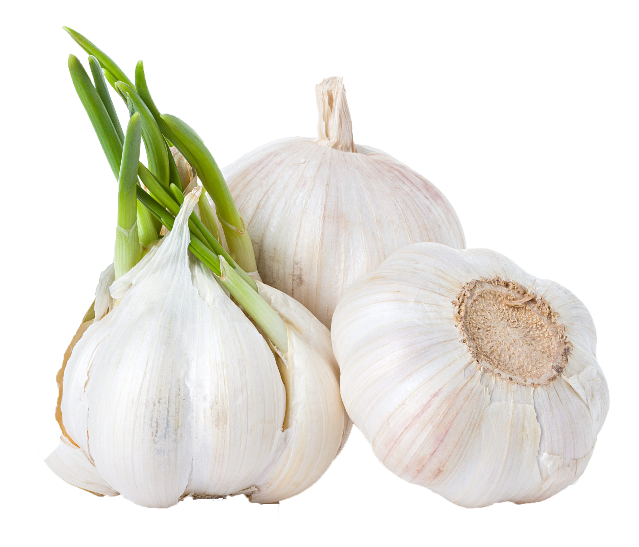 Name png ready made. Garlic clipart acrid