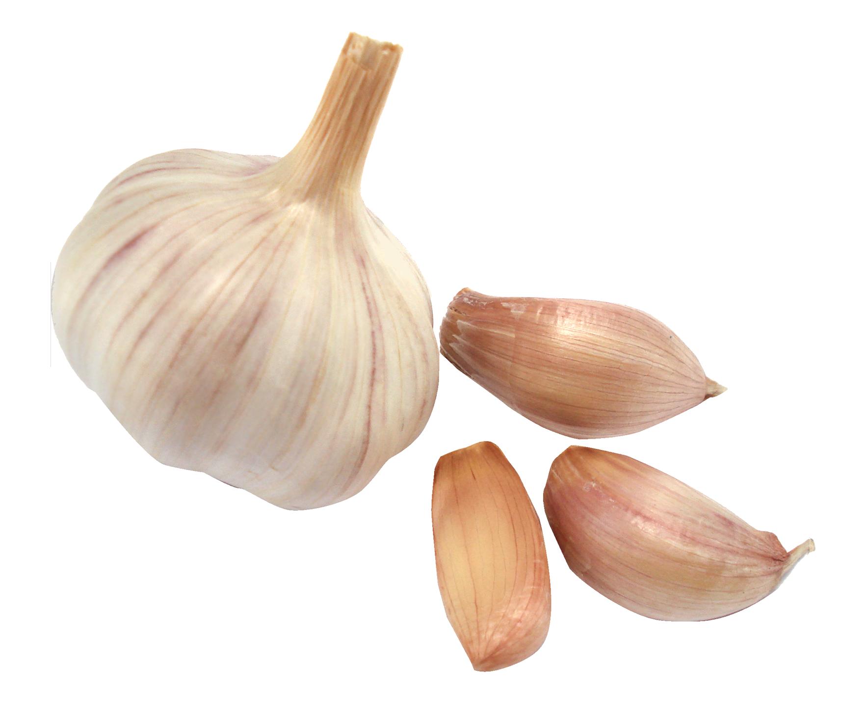 Garlic clipart acrid. Png image purepng free