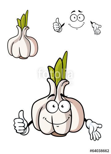 Cartoon whole fresh bulb. Garlic clipart acrid
