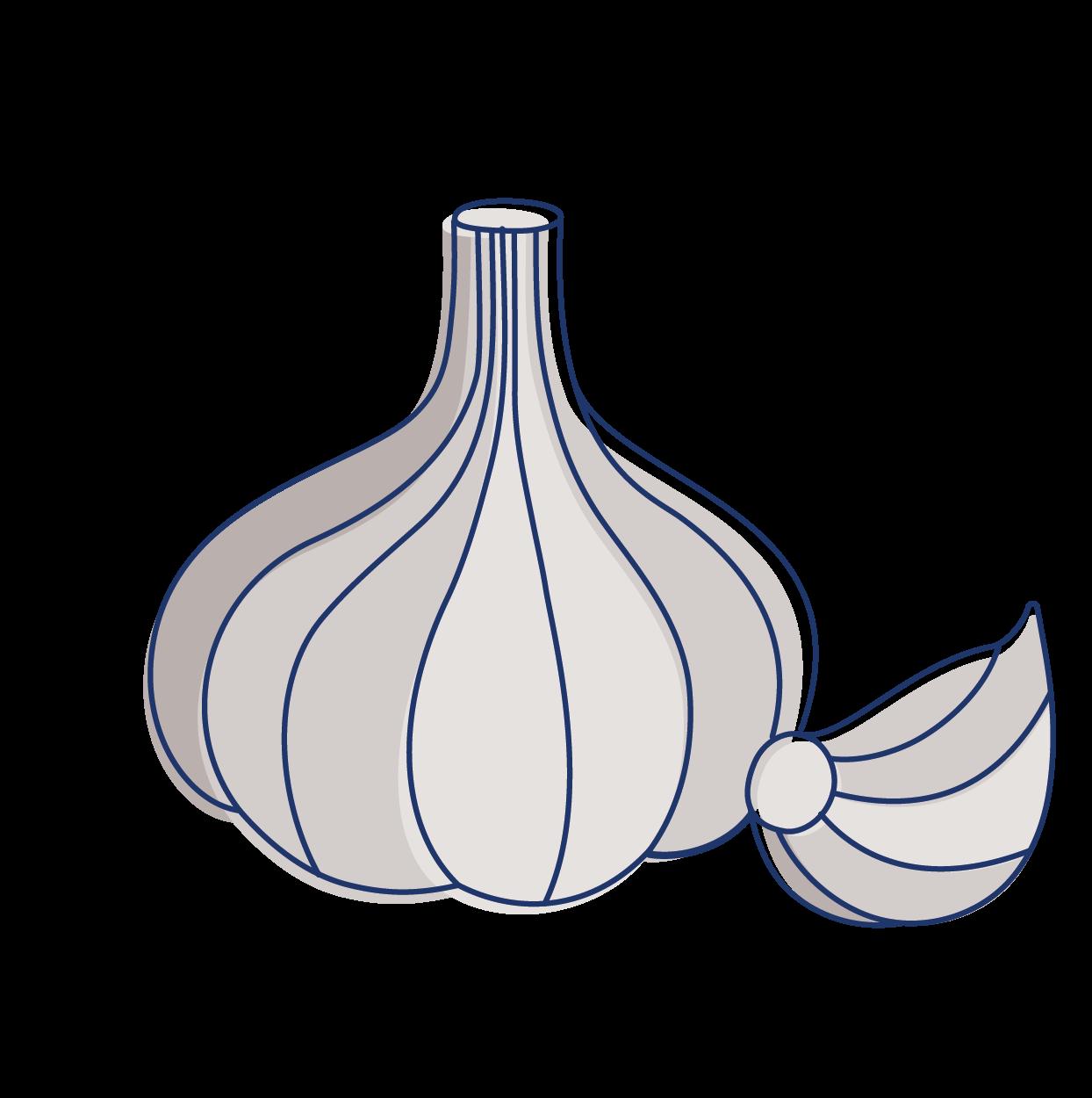 Garlic clipart acrid. Plant tastes and their