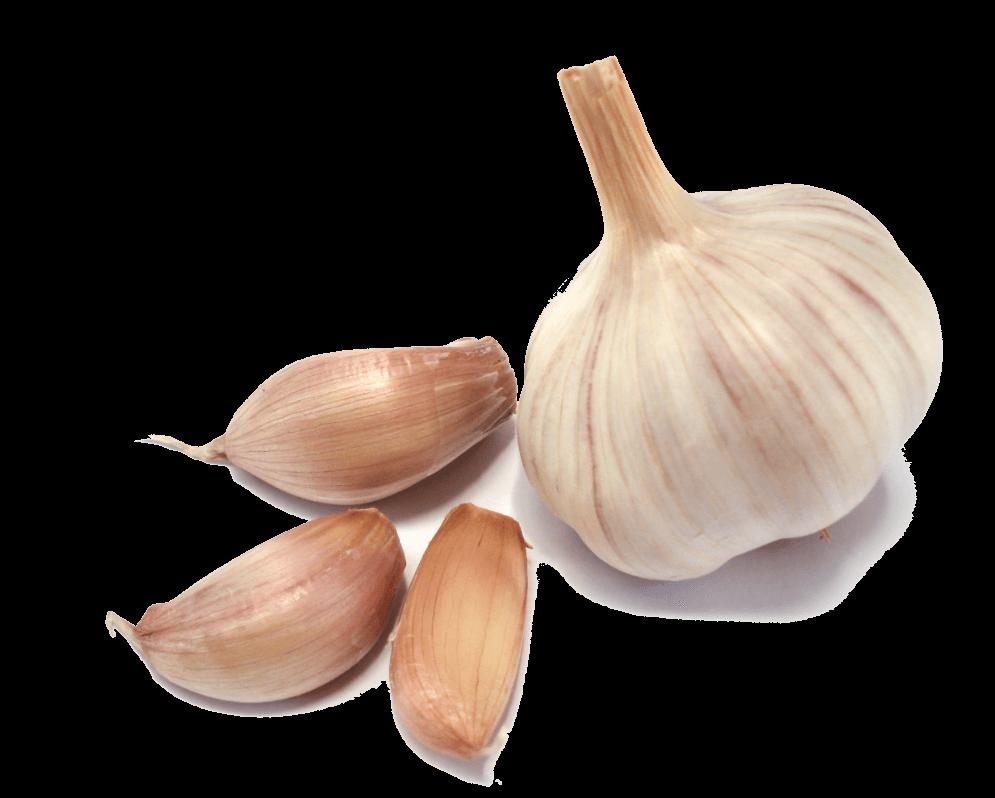 Group transparent png stickpng. Garlic clipart garlic plant