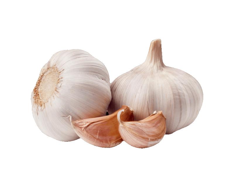 Garlic clipart garlic plant. Clip art onion transprent