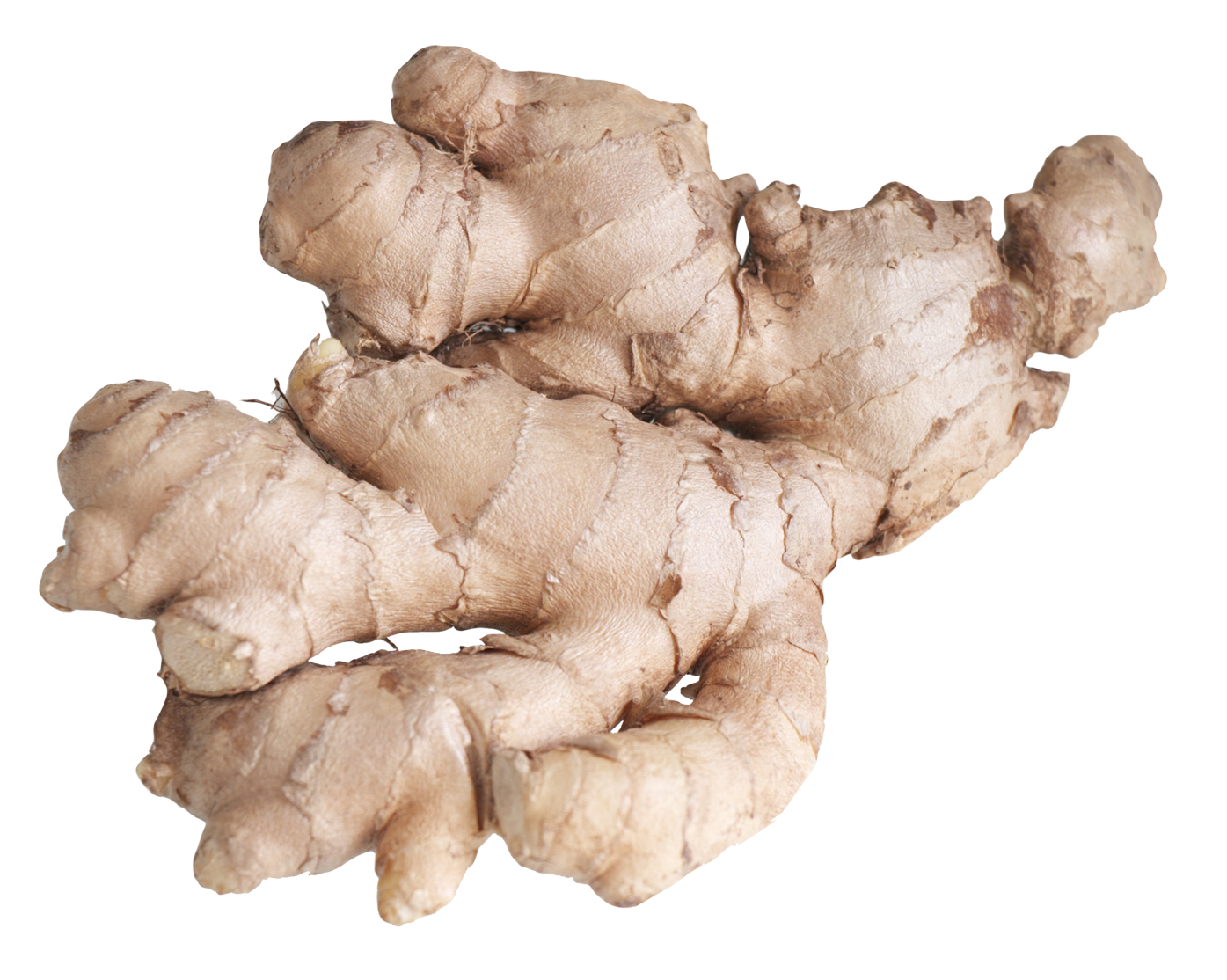 Root png image purepng. Garlic clipart ginger