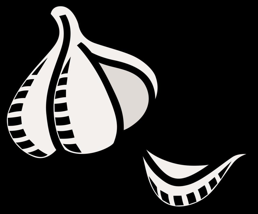 Garlic clipart illustration. Clove vector image of