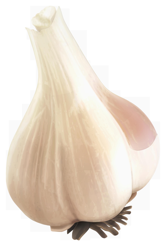 Png images free download. Garlic clipart illustration