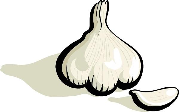 Garlic clipart illustration. Clip art free vector