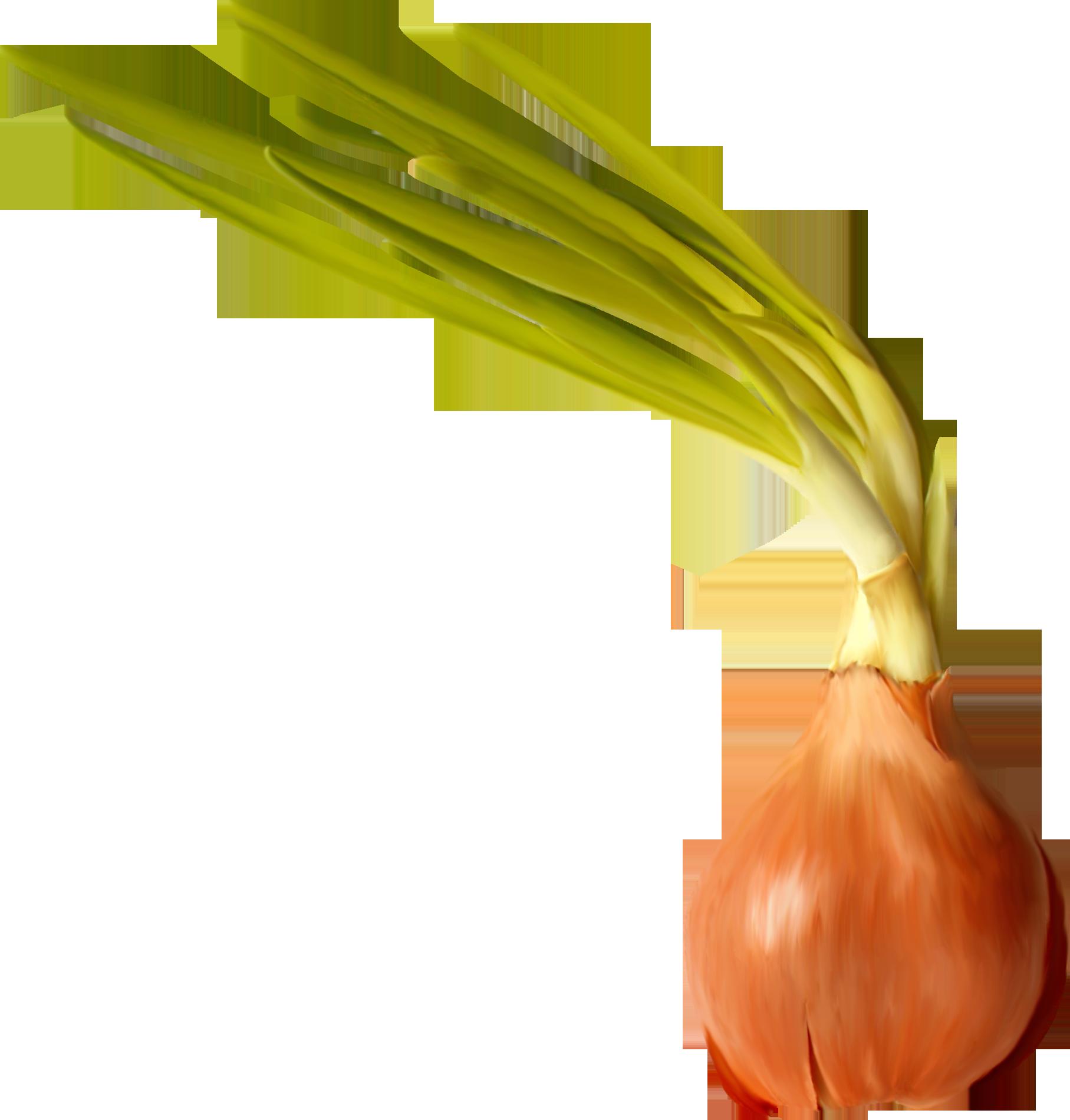 Garlic clipart onion garlic. Food clip art pretty