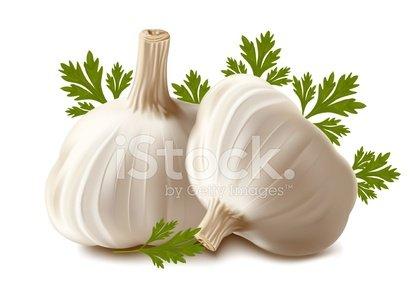 Garlic clipart parsley. With premium clipartlogo com