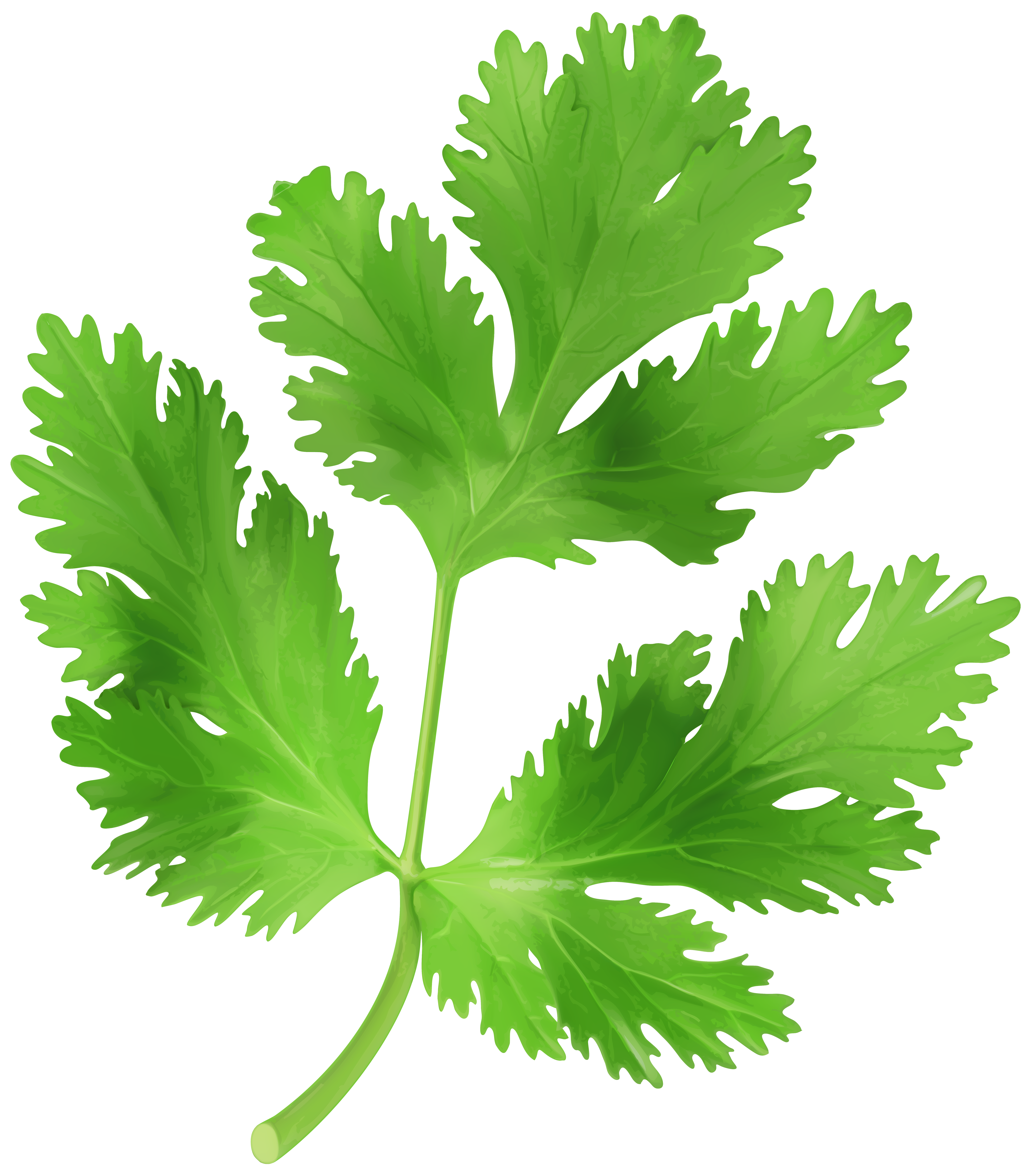 Images of chopped png. Garlic clipart parsley