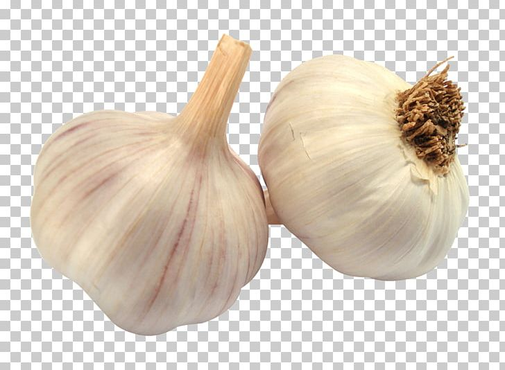 Garlic clipart shallot. Bread soup png elephant