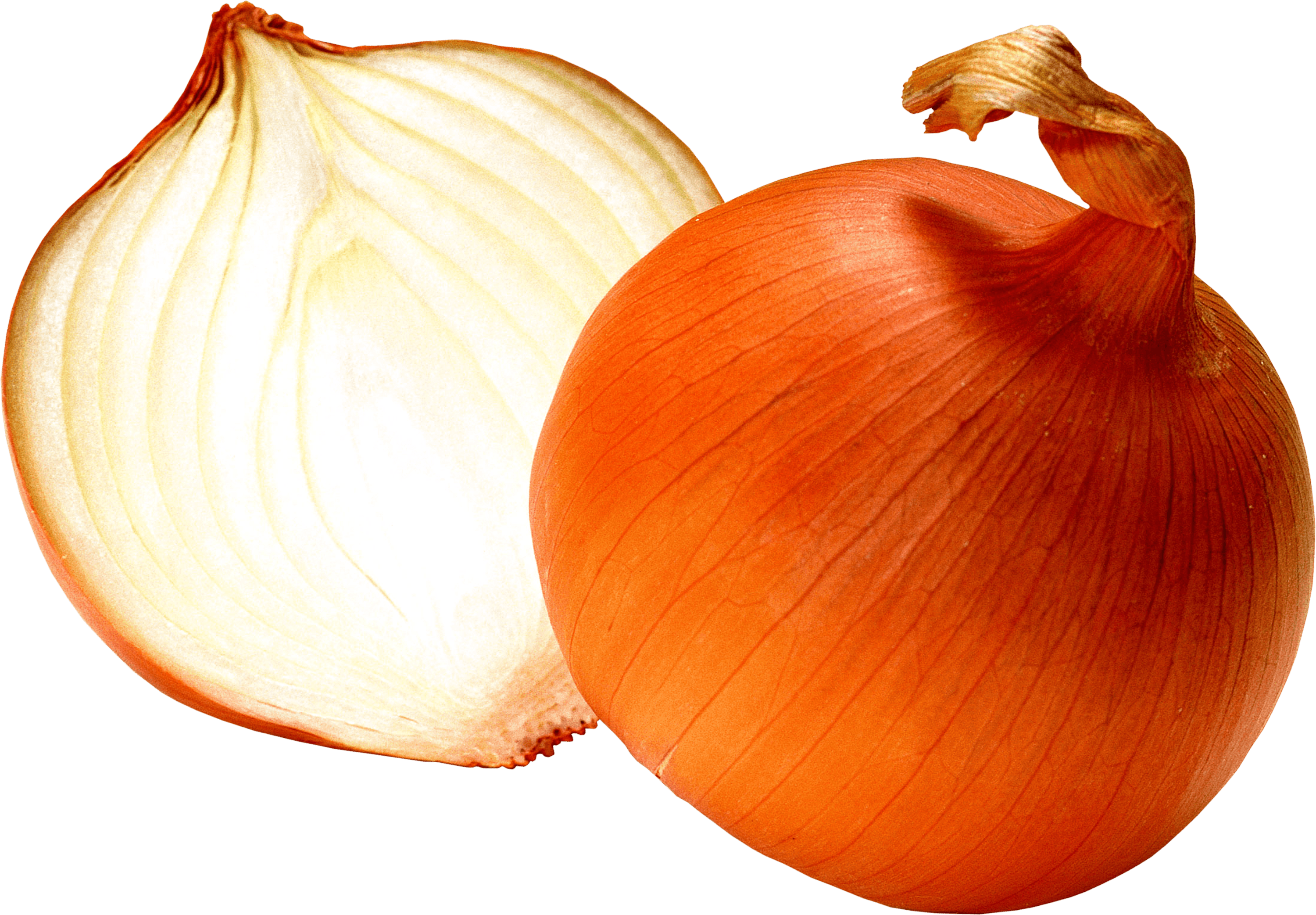 Red onion transparent png. Garlic clipart shallot