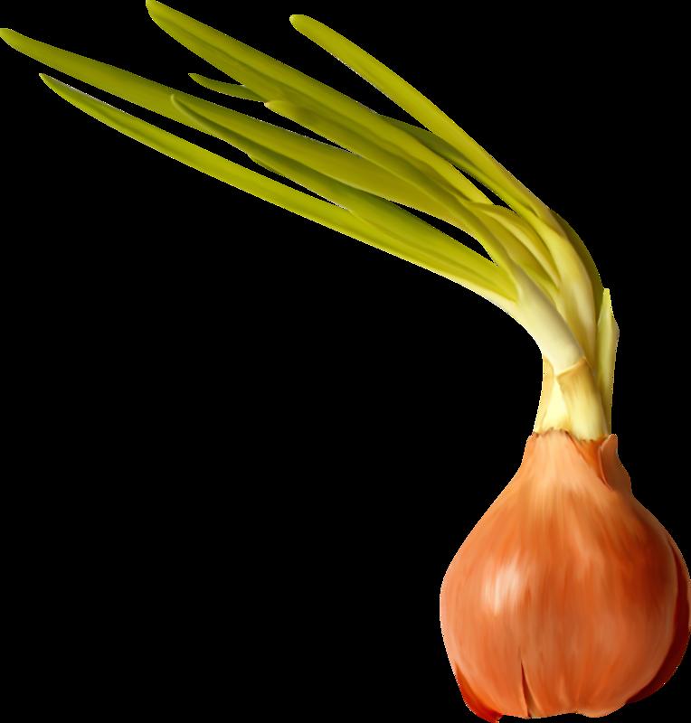 Garlic clipart shallot.  c db f