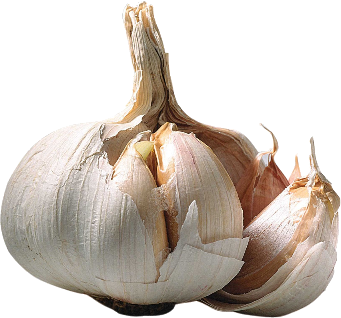 Png images free download. Garlic clipart shallot