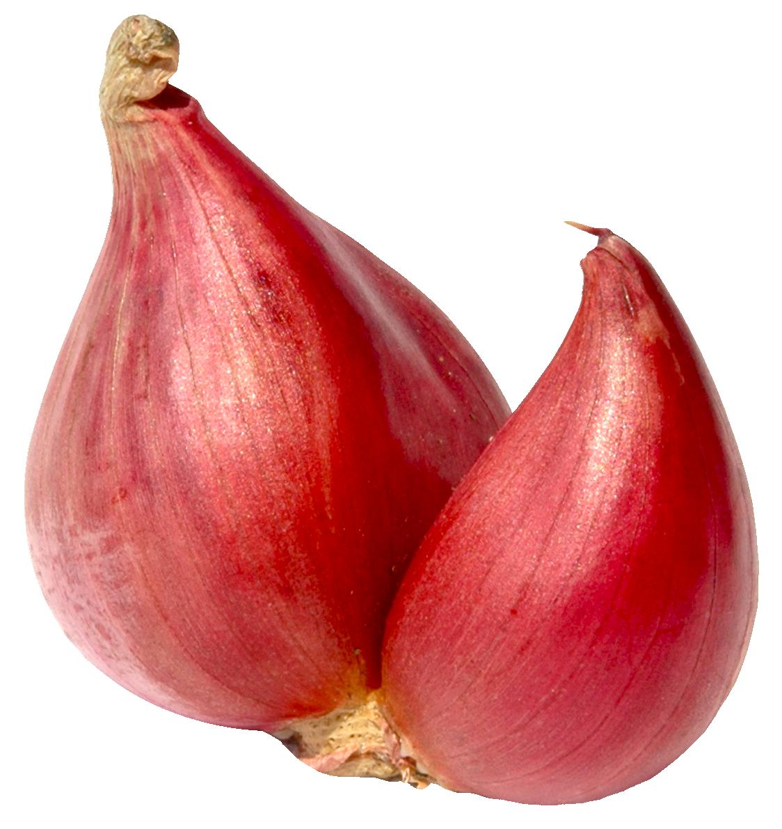 Onion clipart onion peel. Png images pngpix shallot