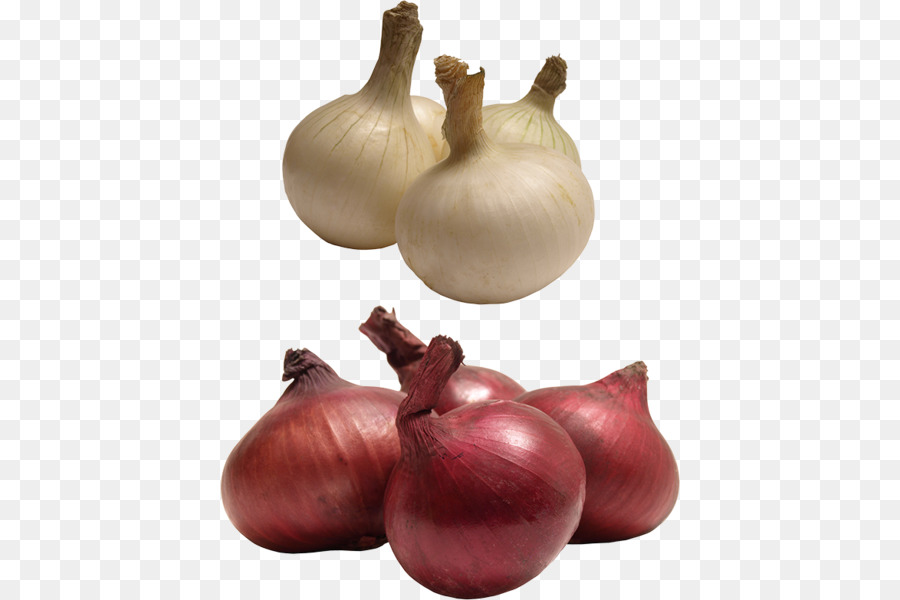 Red onion yellow clip. Garlic clipart shallot