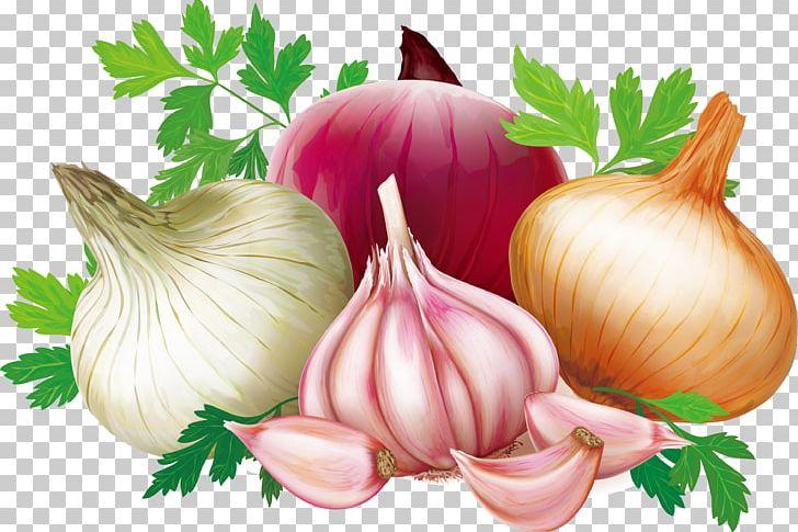Garlic clipart shallot. Quercetin illustration png cartoon