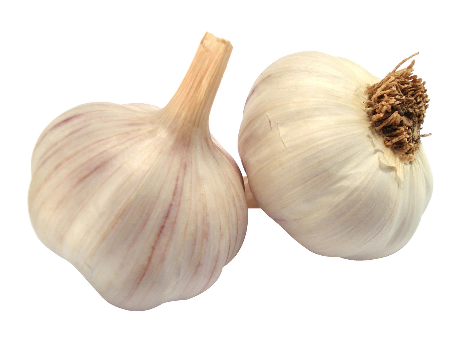 Garlic clipart shallot. Png image purepng free