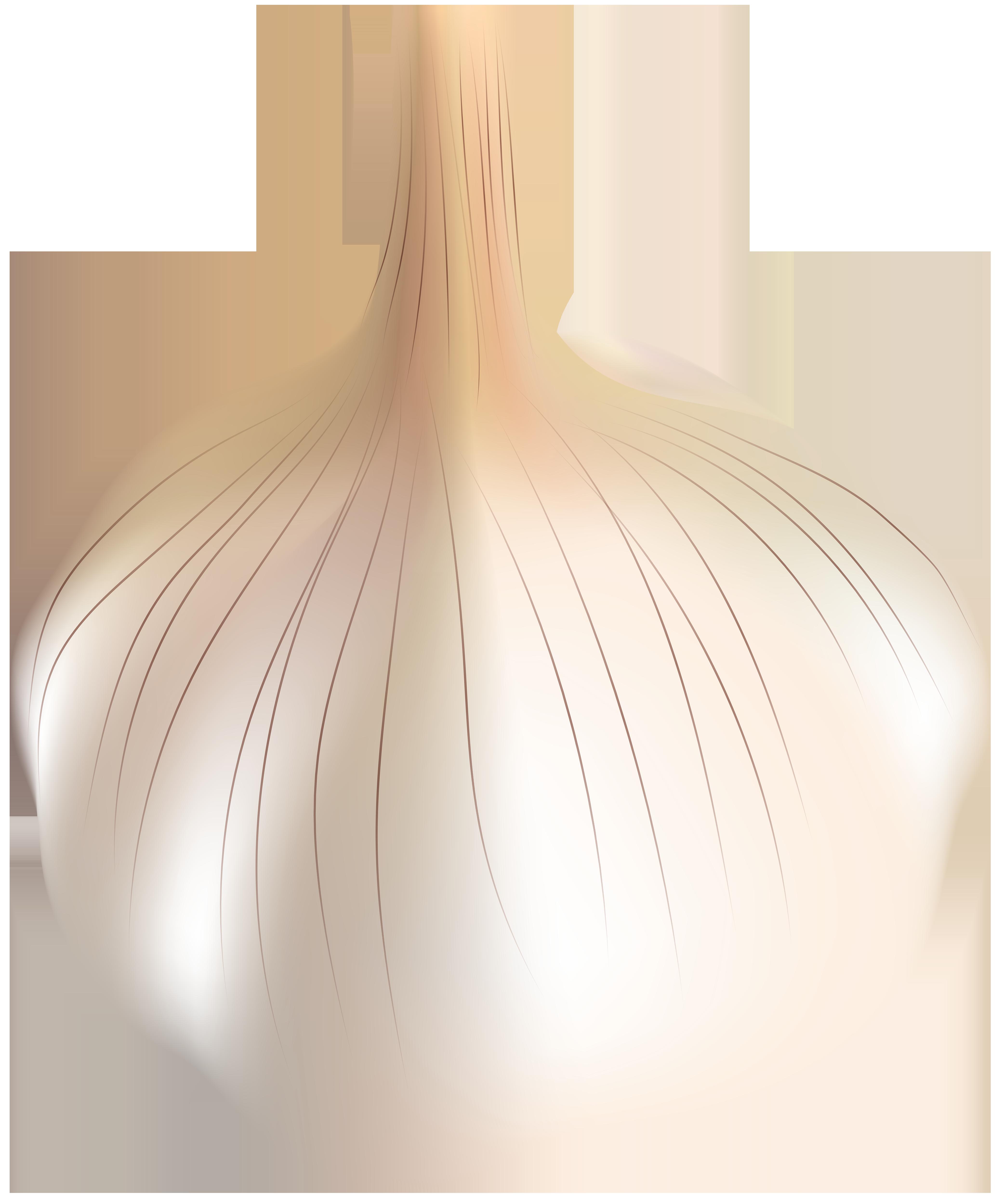 Transparent png clip art. Garlic clipart vegetable