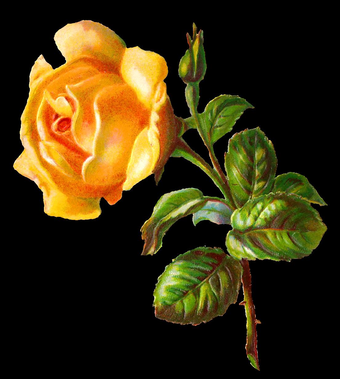 Gate clipart garden shop. Digital rose clip art
