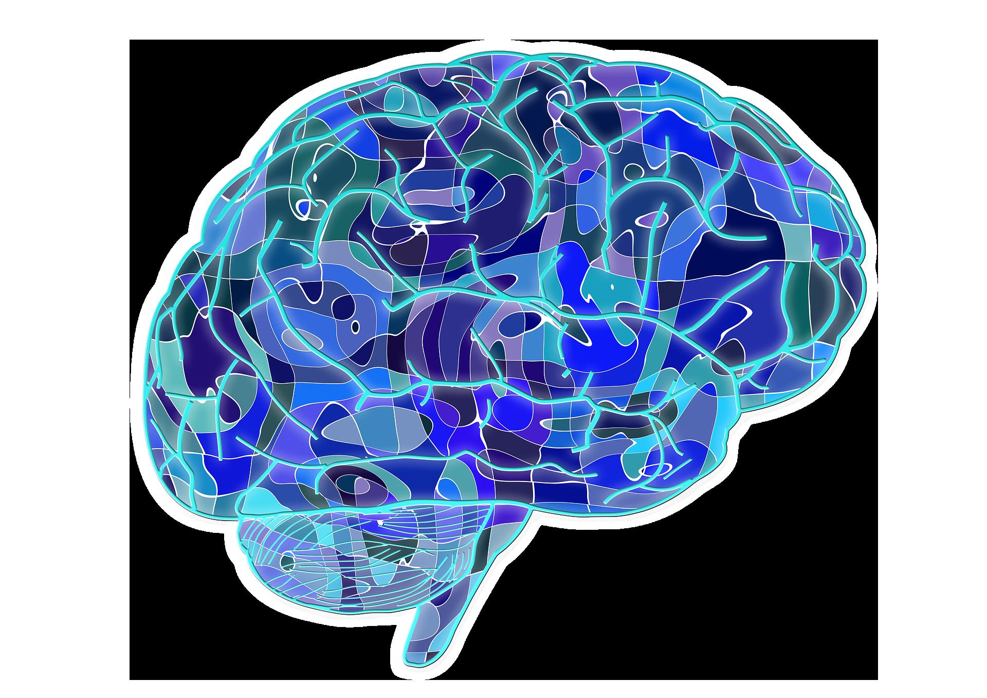 Png transparent images pluspng. Knowledge clipart psychology brain