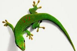 Free. Gecko clipart