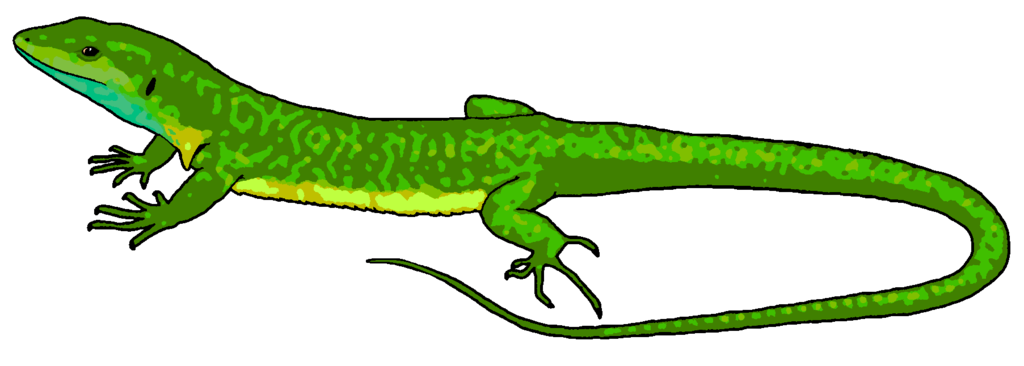 Free download best on. Gecko clipart chipkali