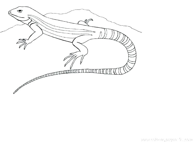 drawing for free. Gecko clipart desert