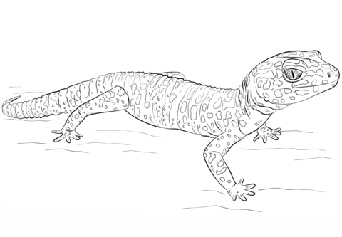 Gecko clipart easy. Leopard coloring page free
