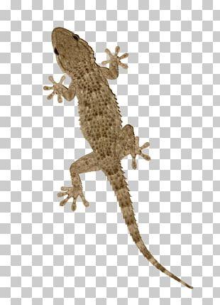 Gecko clipart gekko. Png images free download