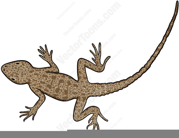 Free images at clker. Gecko clipart house lizard