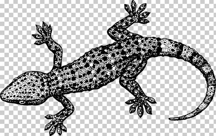 Gecko clipart lizzard. Lizard crested png amphibian
