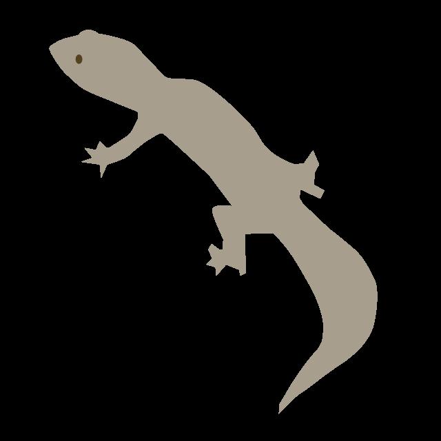 Clip art material free. Gecko clipart newt