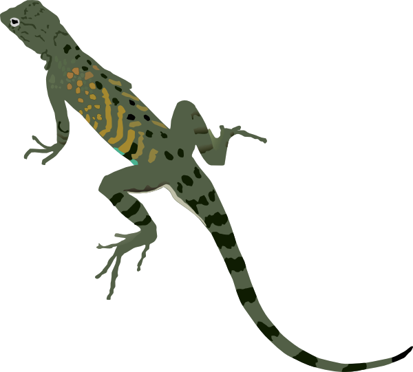 Green black lizard clip. Gecko clipart newt