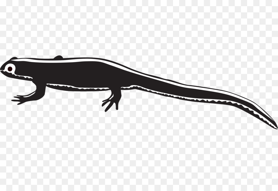 White background lizard font. Gecko clipart newt