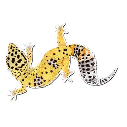 Adorable leopard inch full. Gecko clipart pet lizard