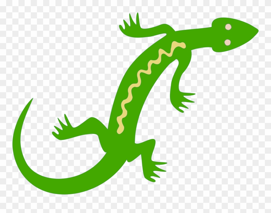 Lizard reptile lacertids . Gecko clipart salamander