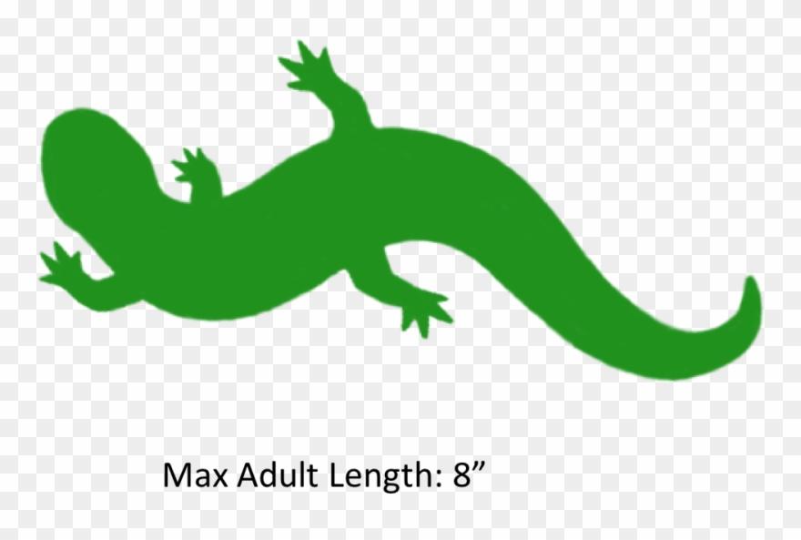 Reptile png download . Gecko clipart salamander