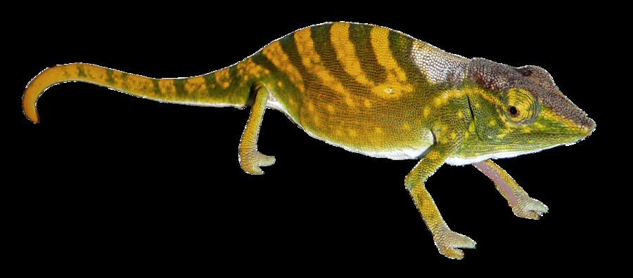 Geckos png pic mart. Gecko clipart transparent background