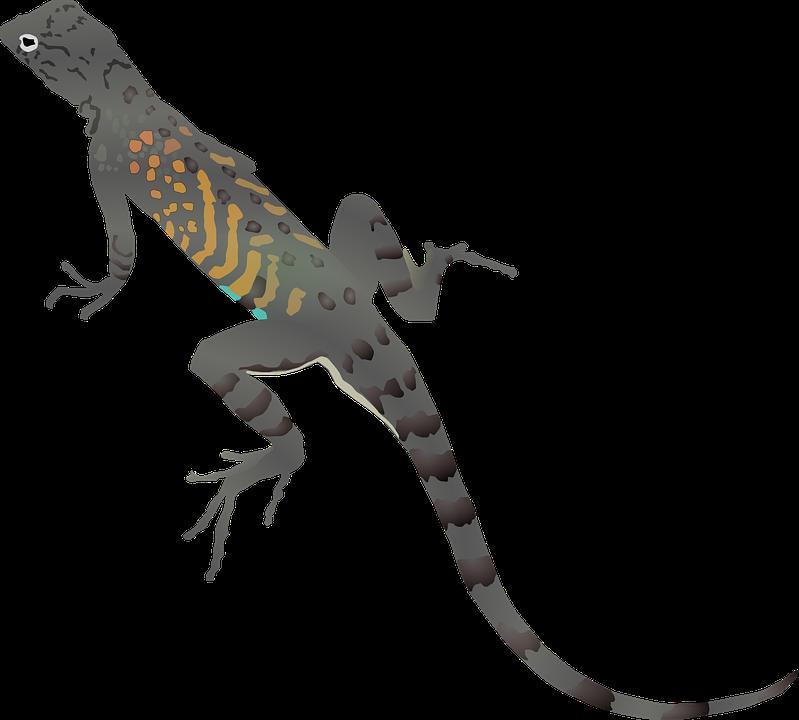 Geckos download png image. Gecko clipart transparent background