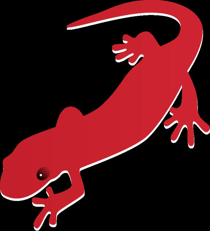 Gecko clipart tuko. Salamander clip art free