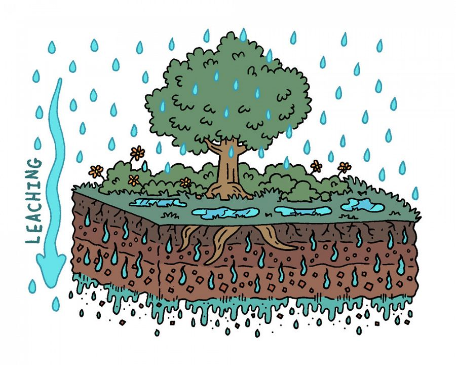Geology clipart importance soil. What is leaching national