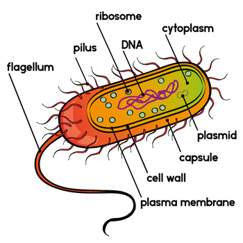 Bacteria free download best. Germ clipart archaea