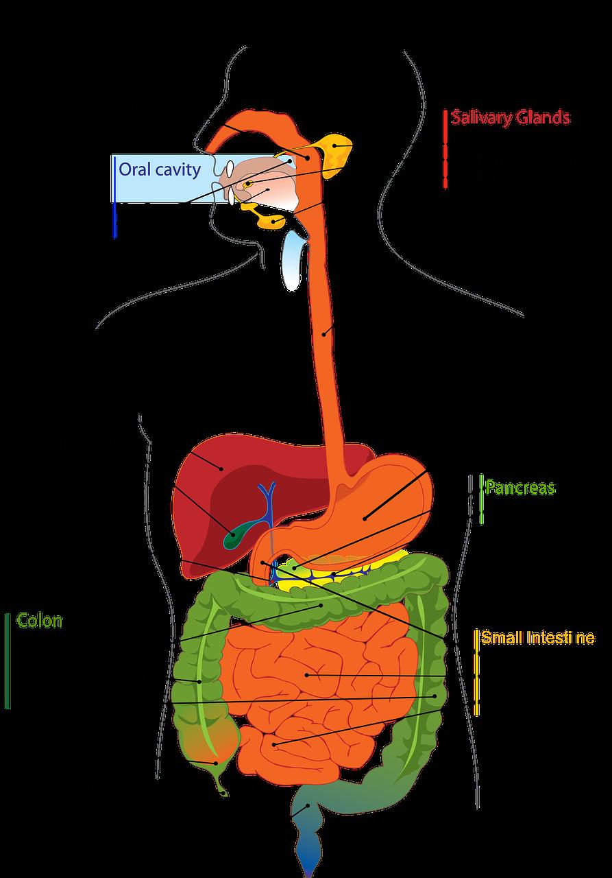 Discover cuenca ecuador killing. Germ clipart bile