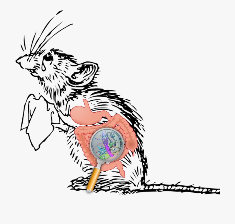 Germ clipart microscopic organism. Microscope sad mouse cartoon